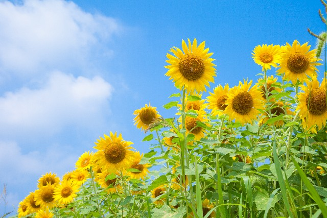 【7月25日〜8月20日】櫻學舎夏期講習のお知らせ