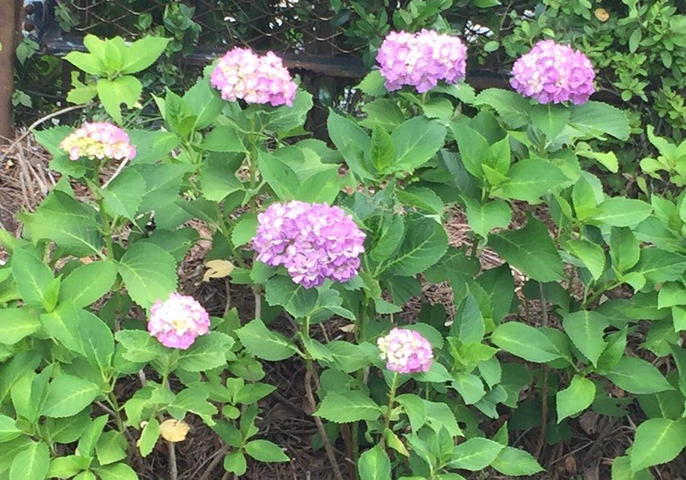 河合杏香の6月の写真集