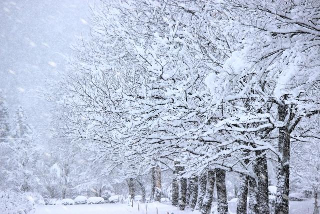 【12月24日~1月8日】櫻學舎冬期講習のお知らせ