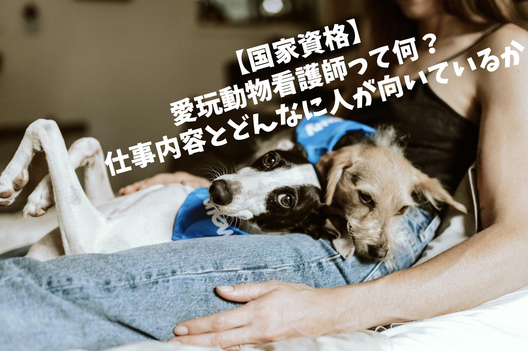 【国家資格】愛玩動物看護師って何?仕事内容とどんな人が向いている...